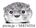コツメカワウソ 56874354