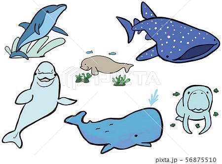 クジラやイルカやマナティ 水辺生物 56875510