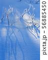 霧氷の雪面 冬の朝 氷点下の朝 56885450