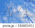 霧氷の雪面 冬の朝 氷点下の朝 56885451