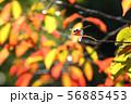 里山の秋 秋 アカトンボ 56885453
