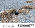 海岸に打ち上げられた漂流ごみ 56900677