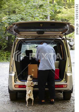 犬とドライブ 56919182