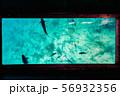 沖縄グラスボートからの海中 56932356