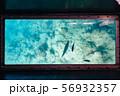 沖縄グラスボートからの海中 56932357