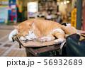 沖縄の猫 56932689