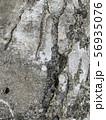 割れたコンクリート 56935076