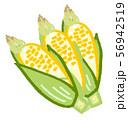 トウモロコシ 56942519