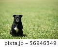 拗ねている犬 56946349