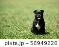 笑う犬 56949226