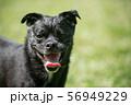 笑う犬 56949229