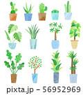 水彩風 観葉植物 56952969