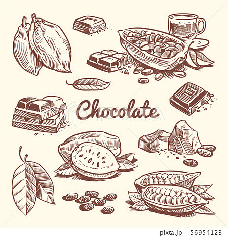 Hand drawn cacao, leaves, cocoa seeds, sweet dessert and chocolate bar. Cocoa sketch vector 56954123