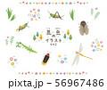 昆虫のイラスト2 56967486