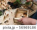 【浅草きんぎょ 金魚すくい】 56969186