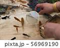 【浅草きんぎょ 金魚すくい】 56969190