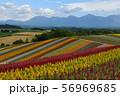 北海道・美瑛 展望花畑・四季彩の丘 56969685