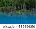 北海道・美瑛 青い池 56969860
