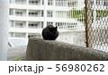 日向ぼっこする黒猫 56980262
