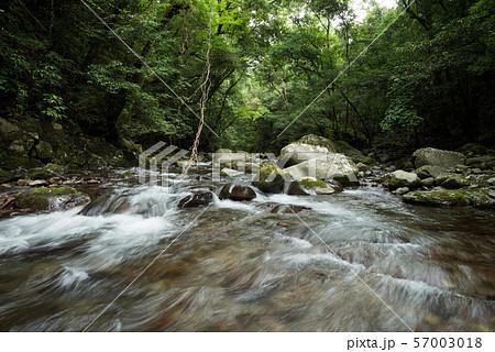 緑の中の奥十曽渓谷の渓流 57003018