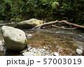 倒木と落石と奥十曽渓谷の渓流 57003019