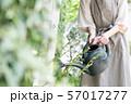 ガーデニング 趣味 水やり ジョウロを持つ若い日本人女性の手元 57017277