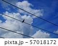 入道雲と電線とカラス 57018172