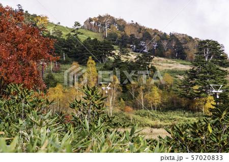 (群馬県)秋の万座温泉 万座スキー場 57020833