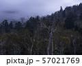 (群馬県)荒涼とした万座・立ち枯れた木 夕景 57021769