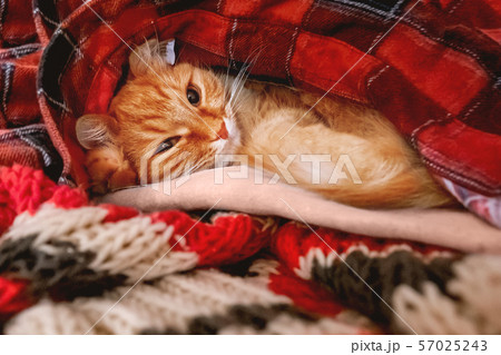 Cute ginger cat sleeps on a pile of warm clothes. 57025243