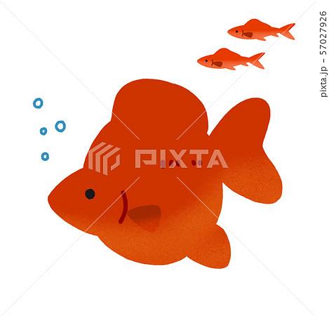 かわいい金魚 単体 57027926