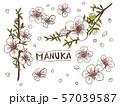 マヌカの花 57039587