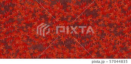 真っ赤な紅葉のじゅうたん 57044835