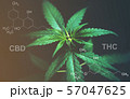 Marijuana leaves with cbd thc chemical structure 57047625