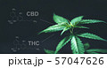 Marijuana leaves with cbd thc chemical structure 57047626