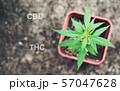Marijuana lin pod with cbd thc chemical structure 57047628
