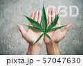 Hand holding marijuana leaf with cbd thc chemical 57047630