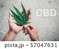 Hand holding marijuana leaf with cbd thc chemical 57047631