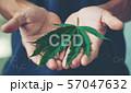 Hand holding marijuana leaf with cbd thc chemical 57047632