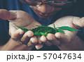 Hand holding marijuana leaf with cbd thc chemical 57047634