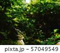 木漏れ日 57049549