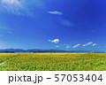 満開の向日葵 やまもとひまわり祭り 宮城山元 57053404