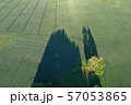 Morning shadows on green spring wheat field, aerial 57053865
