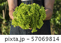Young farmer holding a bunch of green fresh lettuce in his hands 57069814
