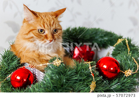 Cute ginger cat lying in box with Christmas and New Year decorations. 57072973