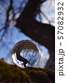 Transparent crystal ball on old apple tree branch 57082932