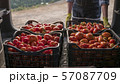 Farmer loads crates of tomatoes in the trunk of a car 57087709