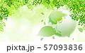 新緑(若葉) 57093836