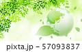 新緑(若葉) 57093837