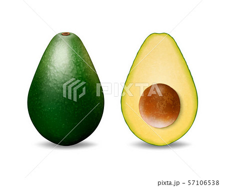 Vector 3d Realistic Whole and Half Avocado with Seed Closeup Isolated on White Background. Design 57106538